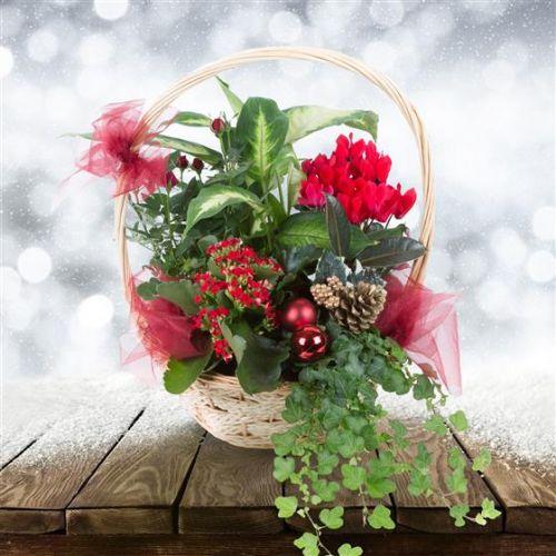 Festive Planted Basket